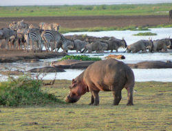 Northern Tanzania & Zanzibar Safari Report