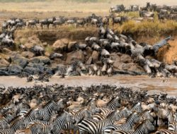 How to Enjoy Serengeti National Park