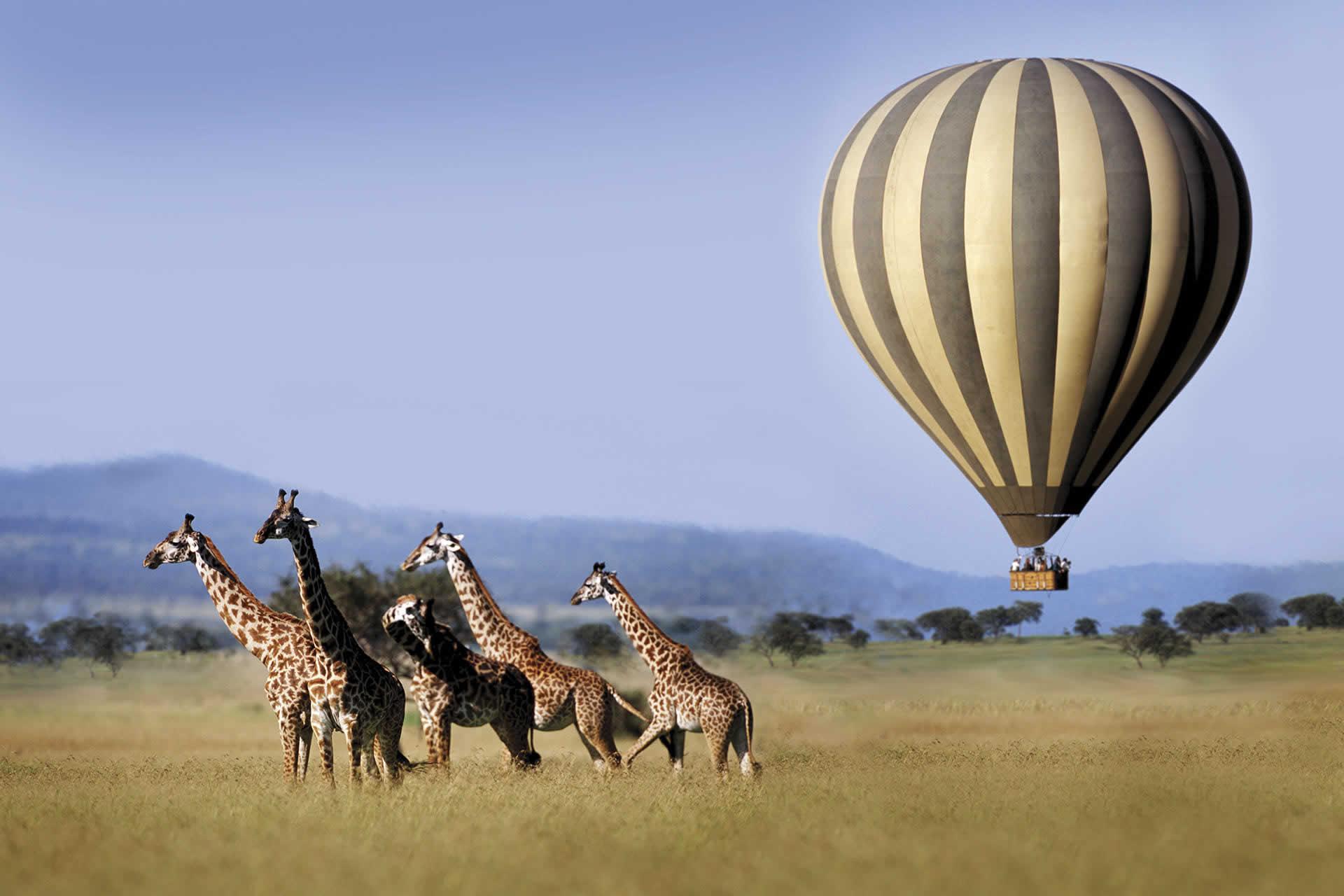Unbiased Safari Answers