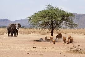 5 Best National Parks in Kenya