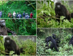3-Day Gorilla Trekking and Safari