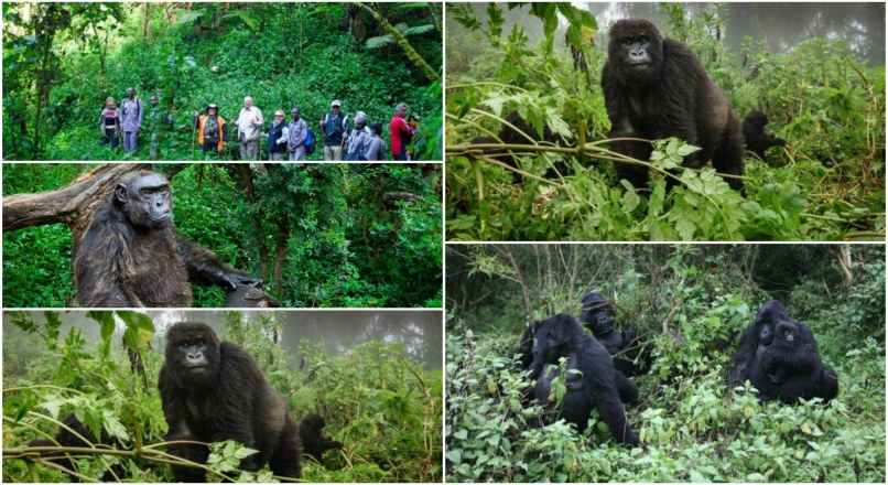 3-Day Gorilla Trekking and Safari
