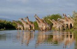 Top 10 Tanzania National Parks