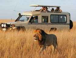 Where to go in Africa in July