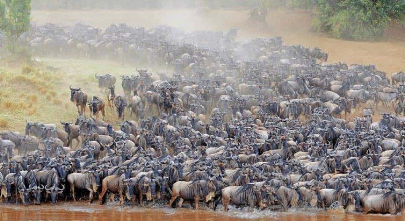 African Safari I Safari Questions