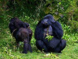 14-Day Rwanda Tour and Uganda's Gorillas