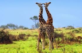 Uganda safaris and tours