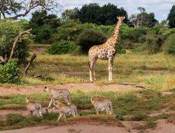Mashatu Game Reserve Botswana