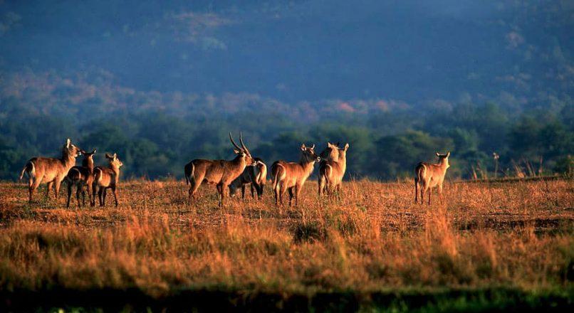 6-Days Rwanda and Uganda Wildlife Budget Safari