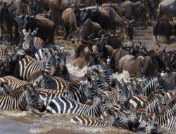 Serengeti and Kenya Migration Map