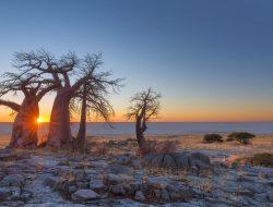 Activities in Central Kalahari Botswana