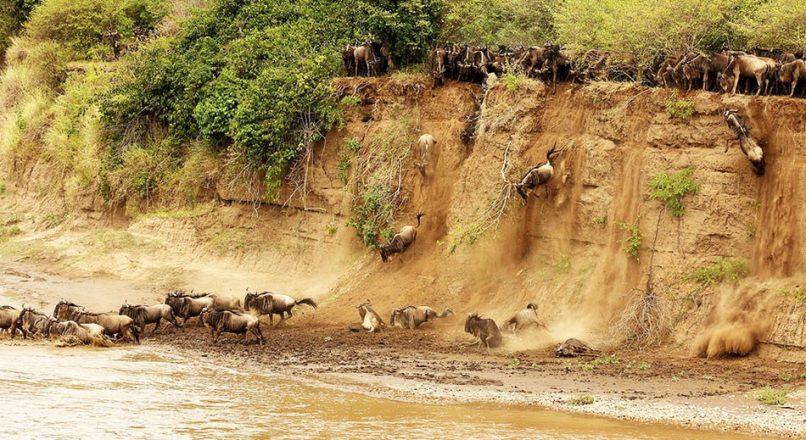 8-Day The Best of Kenya Wildlife Safari