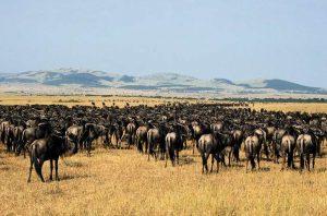 Local Tourists Flock to Maasai Mara