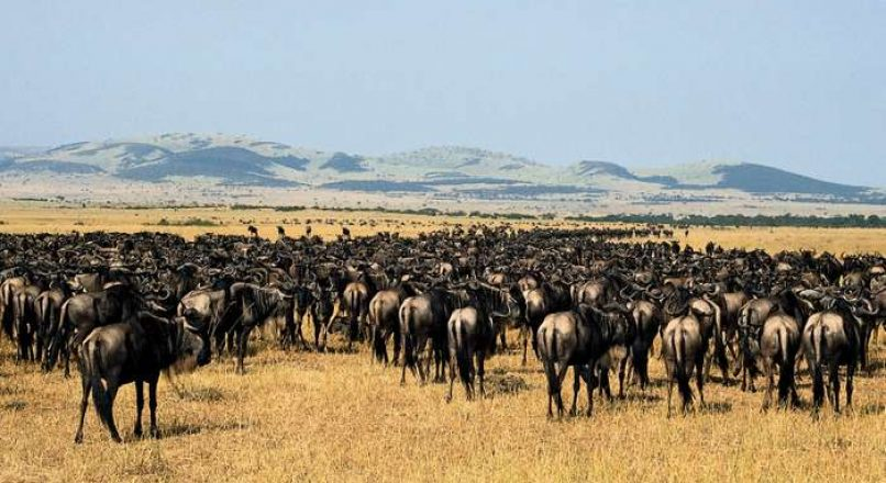 Local Tourists Flock to Maasai Mara