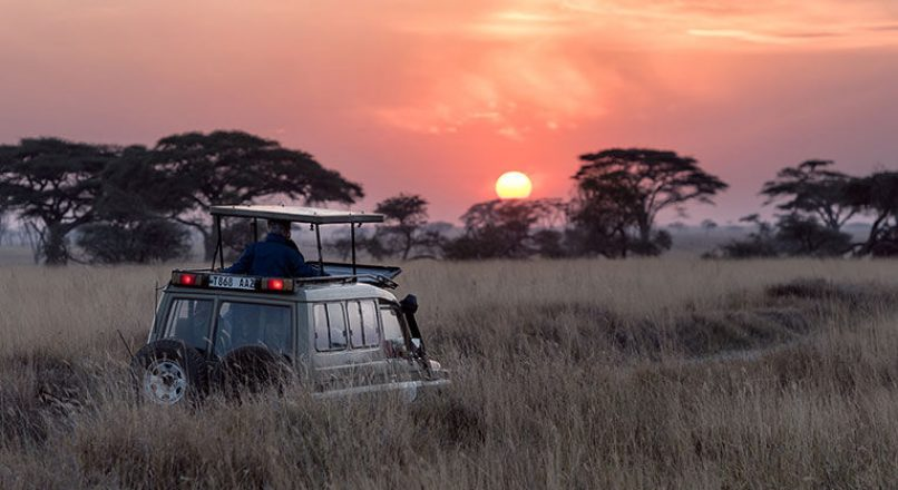 Serengeti Private Game Drive