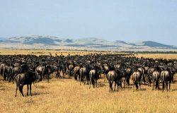 To 10 Tanzania Nationoal Parks